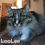 LooLee was adopted from the Cat House and Adoption Center on Saturday, January 28, 2017.<br /> <br /> LooLee<br /> <br /> What just happened?<br /> <br /> When the tables turned and her owner did not come home, LooLee was left wondering what was going to happen. Slow to warm up, she has this need to be touched and comforted. Do you need some comfort in your life?