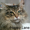 Happy Lane was adopted from the Cat House on Saturday, January 19, 2019.