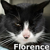 Florence and Peterbuilt were adopted together from the Cat House on Saturday January 26, 2019.
