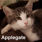 Applegate was adopted from the Cat House on Saturday, January 19, 2019.  <br /> <br /> Applegate<br /> <br /> Sweet boy.<br /> <br /> Just a little boy with his family trying to survive as fall weather sets in and the temperatures drop. Thankfully a lady started providing food and water to them all. Little Applegate is very fond of snuggling with other cats and has a very loud purr.