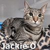 Jackie O and Melania were adopted from the Cat House on Saturday, January 19, 2019.<br /> <br /> Jackie O and Melania<br /> <br /> Sisters and best friends.<br /> <br /> These two young ladies are in need of their own indoor treehouse. With lots of energy and a new life ahead of them, they are anxious to move on up in the world. They will keep you entertained and amazed with their feline abilities.