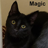 Magic and Miracle (brother and sister) were adopted from Steamboat Animal Hospital on Friday, January 4, 2019.