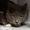 Wallin was adopted from the Cat House on Saturday, January 19, 2019.