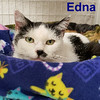 Edna was adopted from the Cat House on Saturday, January 19, 2019.<br /> <br /> Edna<br /> <br /> Walking the streets of Shelton.<br /> <br /> Sweet and loving, this lady put in some serious miles on her pedometer and finally caught a break after 2 years on her own. An older lady and so adorable, Edna wants a retirement home.