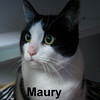 Maury and Whaley were adopted from the Cat House on Saturday, January 19, 2019