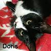 Doris and Allyson were adopted from the Cat House on Friday, February 1, 2019.<br /> <br /> Doris<br /> <br /> Delightful.<br /> <br /> And an upbeat attitude. Sweet, playful, and loving life, Doris would make a good companion for another special feline or just you.