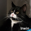 Irwin was adopted from the Cat House on Saturday, February 2, 2019.<br /> <br /> Irwin<br /> <br /> Tux and tails.<br /> <br /> He's passionate for pets and can really enjoy some one-on-one time to make up for what he hadn't previously received. He's a solid boy that likes his food, appreciates kindness, and soaks up all the love he can get.