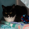 Cyrus was adopted from the Cat House on Saturday, February 2, 2019.<br /> <br /> Cyrus<br /> <br /> Black and White Beauty!<br /> <br /> Sweet temperament and a shiny black and white coat, this fine lady is looking to join a family. She is used to sharing with other cats. She is young and ready to bond. Consider this darling.