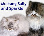 Mustang Sally and Sparkle adopted 1/17/05.