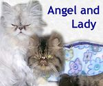 Angel and Lady adopted 1/18/05.