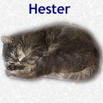 Hester adopted 4/30/05.