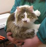 Sassy adopted 5/1/05.