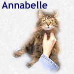 Annabelle adopted 4/30/05.