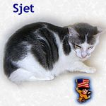Sjet adopted 7/30/05.  Sjet is an Oriental Mix female that appreciates Independence Day but prefers not to participate in any fireworks. While Sjet is sad to be displaced by her family, she's determined to charm everyone she meets.