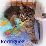 """Rodriguez adopted 7/31/05.  Little Rod is chompin' at the blanket in anticipation of his """"forever"""" home."""