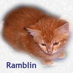 Ramblin adopted 7/29/05.
