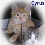 Cyrus adopted 7/27/05.  Cyrus is staying under the protection of his foster mom.  Suffering from abuse at such a young age makes it difficult to trust.
