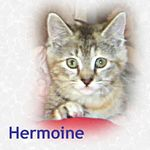 Hermoine adopted 7/19/05.  Hermoine and her sister, Harriet, were abandoned and fending for themselves.  They need a home with devoted humans that will make sure they are taken care of.