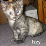 Izzy adopted out of her foster home during October 2005.