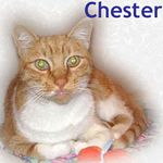 Chester didn't stay with us long, a family was ready and waiting. Adopted on 10/16/05.