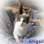 Abigail adopted from PetsMart 10/25/05.  Abigail is a friendly 1 year old bi-colored female.