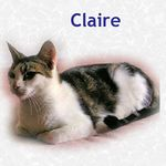 Claire adopted from PetsMart 10/23/05.  This beauty is a 1 year old brown classic tabby w/white.  Claire is friendly but can be reserved when the mood suits her.