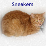 Sneakers was thrown away by her original owners and adopted to a new family on 10/28/05.