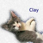 Clay adopted from PetsMart 10/25/05.