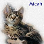 Micah adopted from PetsMart 10/15/05.  How can one be so handsome and humble too? It can't be easy but Micah seems to manage.