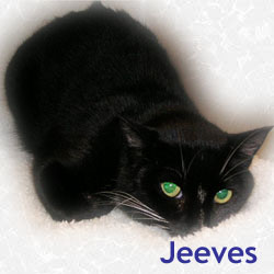 Jeeves adopted 10/12/05.