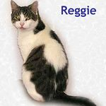 Reggie adopted from CHAC on 10/16/05.  This regal looking fellow is Reggie. He's a social cat looking for good company and good conversation.