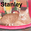 Stanley adopted from CHAC on 2/9/07. Stanley's strong physical presence will attract you - his soulful eyes and sensitive purrsonality will make you stay.  Stanley was once king of the house and then champion of the neighborhood.  But his fighting days caused injuries that required medical attention.  Stanley's now healing nicely from his battle wounds and is ready to find a home to reign over again.