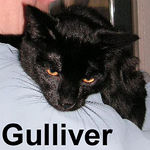 Gulliver adopted from CHAC on 1/20/07.