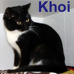 Khoi adopted from CHAC on 1/7/07. Khoi means beautiful in vietnamese and that description fits this girl perfectly.  She's a little purr bucket that soaks up all the affection she can get.