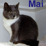"""Mai adopted from CHAC on 1/27/07. Mai (pronounced My) isn't just another pretty face.  She's smart and loving too!  Mai was abandoned when her family moved away and left her behind.  Now she's thriving with all the love and attention she gets in her new """"forever"""" home."""