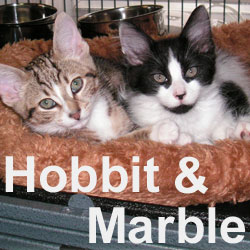 Hobbit and Marble adopted (separately) from Petsmart on 1/6/07.