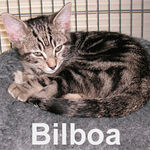 Bilboa adopted from PetsMart on 1/6/07.