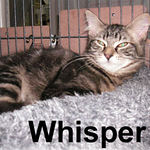 Whisper adopted from CHAC on 1/20/07.