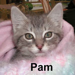 Pam adopted from Steamboat Animal Hospital on 1/6/07.