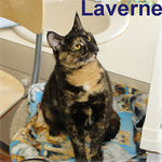 Laverne adopted from CHAC on 1/19/07. Laverne may look like a proper lady but she's much more than that!  This young, playful, affectionate cat has an outgoing and adventurous spirit.
