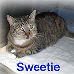 "Sweetie adopted from SBVH on 2/1/07. Sweetie is adorable, loving and looking for a home that will appreciate her precious purrsonality.  Sweetie's engine purrs strong in response to your handling. If you're looking for a social cat, cruise into <a href=""http://b29.hostrack.net/feline-friends.net/httpdocs/SBVH/Index.html"">South Bay Veterinary Hospital</a> and meet this girl!"