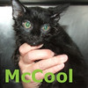 McCool and Pinto Kitty were adopted from Steamboat Animal Hospital on Thursday, August 27th, 2009.