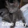Zane Grey was adopted from the Cat House and Adoption Center on July 25, 2009.