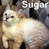 Sugar was adopted from her foster home on Friday, July 10, 2009.