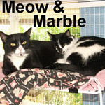 Meow and Marble were adopted from the Cat House and Adoption Center on Sunday, July 26, 2009.