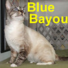 Blue Bayou was adopted from the Cat House and Adoption Center on Wednesday, July 22, 2009.