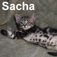 Sasha was adopted from  his foster home on Saturday, August 1, 2009
