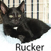 Rucker and Mattie Lou were adopted from the Cat House and Adoption Center on Saturday, July 18, 2009.