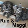 Rue and Maggi were adopted together from the Cat House and Adoption Center on Saturday, July 11, 2009.