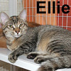 Ellie and Gene-O were adopted from the Cat House and Adoption Center on Saturday, July 18, 2009.